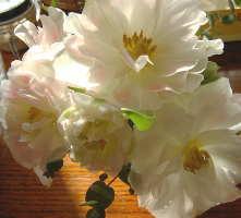 フライング2007花束2