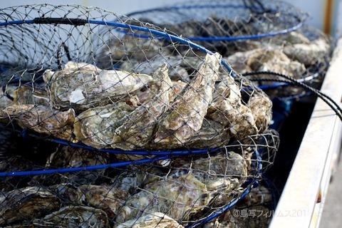 篠島牡蠣祭り_2018-02-11 09-43-53