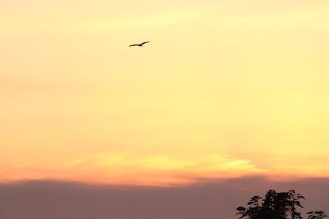 島写_松島の夕日2011-03-05 17-46-48