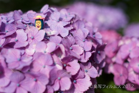 東山_篠島_風景_観光_紫陽花_2012-06-17 14-52-16