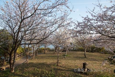 桜_北山公園_2012-04-12 16-54-04