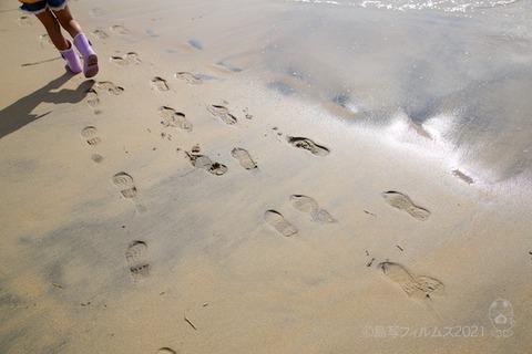 篠島ウミガメ隊_2021-07-28 07-49-51