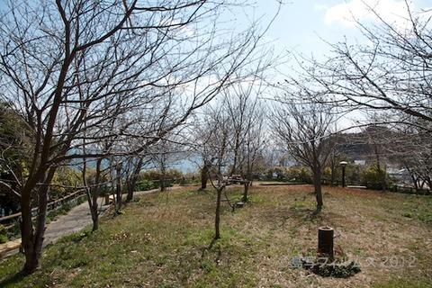 篠島_風景_観光_桜_2012-03-26 11-57-53