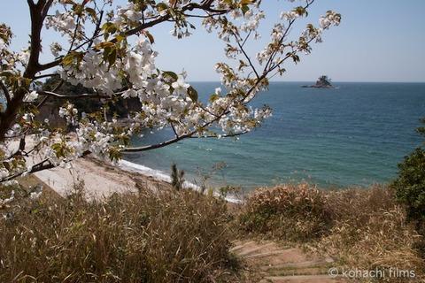 島写_松島_桜_篠島の風景_2011-04-12 12-16-00