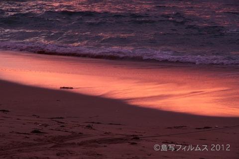 前浜サンサンビーチ_朝日_ドーンパープル_ 2012-08-28 05-08-28