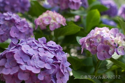 東山_篠島_風景_観光_紫陽花_2012-06-17 14-46-17