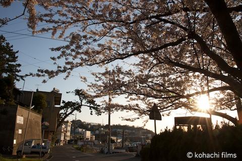 桜_北山公園_2011-04-12 17-29-46