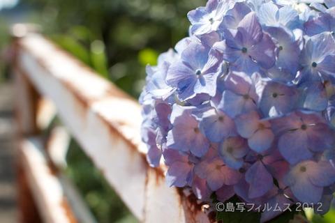 東山_篠島_風景_観光_紫陽花_2012-06-17 14-57-46