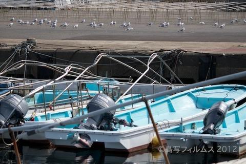 篠島魚_漁港_篠島_風景_カモメ_2012-03-20 13-42-45