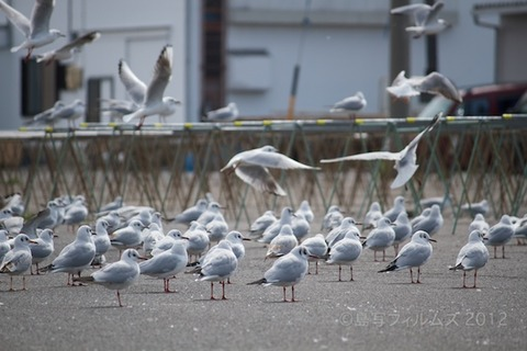 篠島魚_漁港_篠島_風景_カモメ_2012-03-20 13-32-08