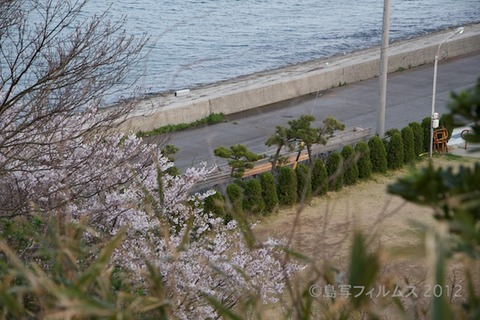 桜_北山公園_2012-04-12 17-36-01