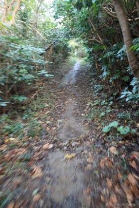 島写_篠島_風景_観光_2010-10-30 16-36-11