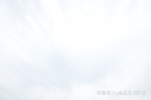 日間賀島_自転車_日間賀島音楽祭_HMK_イルカ_ 2012-05-20 13-08-42