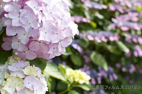 東山_篠島_風景_観光_紫陽花_2012-06-17 15-05-25
