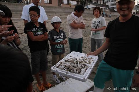 ウミガメ孵化_篠島_写真_前浜_放流_2011-09-06 18-15-47