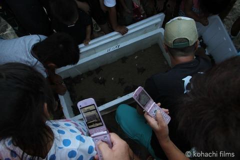 ウミガメ孵化_篠島_写真_前浜_放流_2011-09-06 17-36-38