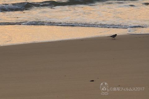 松島の夕日_2017-12-07_16-08-44