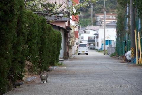 桜_北山公園_2012-04-12 17-37-22