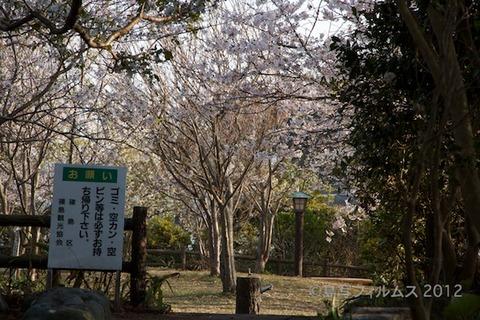 桜_北山公園_2012-04-12 16-53-03