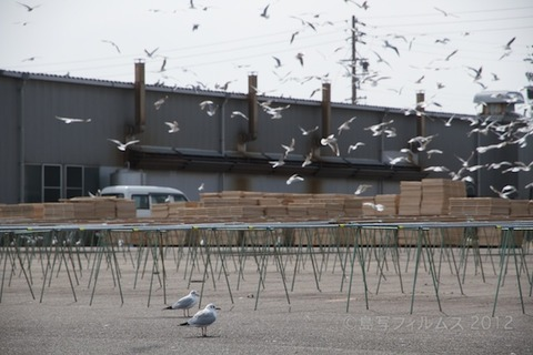 篠島魚_漁港_篠島_風景_カモメ_2012-03-20 13-33-49