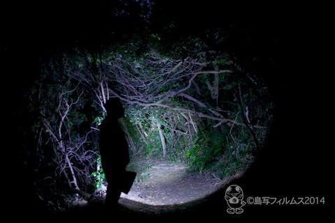 篠島ヒメホタル_2014-05-13 22-08-22