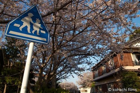 桜_北山公園_2011-04-12 17-26-48