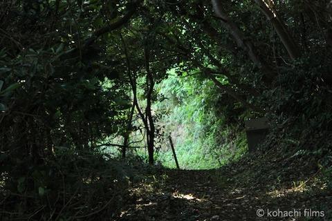 海岸日和_篠島_風景_大潮_2011-07-01 15-09-55