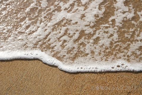 ウミガメ隊_クリーンアップ_#seaturtle_2012-08-08 07-24-51