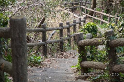 桜_北山公園_2012-04-12 17-30-22