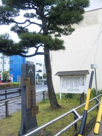細井の松原