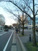 トヨタ車体の正門前の桜