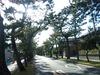 舞坂松並木