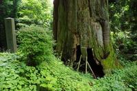 矢立の杉2