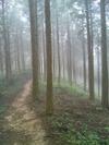 霧の遍路道
