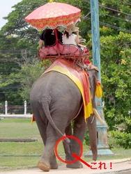 アユタヤの象
