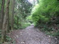 小仏峠の登山道