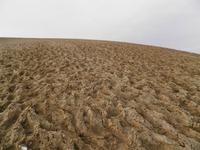 足跡だらけの鳥取砂丘