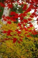 京都も紅葉(銀閣寺)