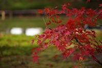開山堂の庭園の紅葉
