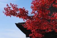 京都の紅葉(清水寺)