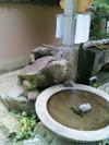 浄瑠璃寺の亀