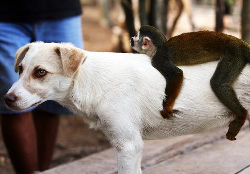 dog-monkey
