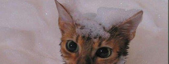 お風呂に入った猫が可愛い