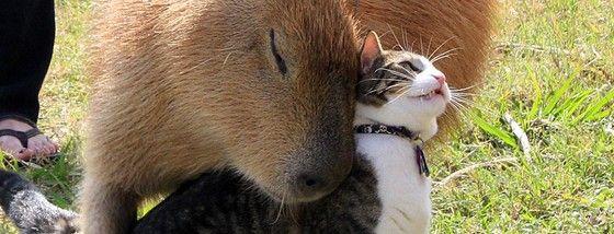 カピバラさんは誰とでも仲良くなり誰をも癒す