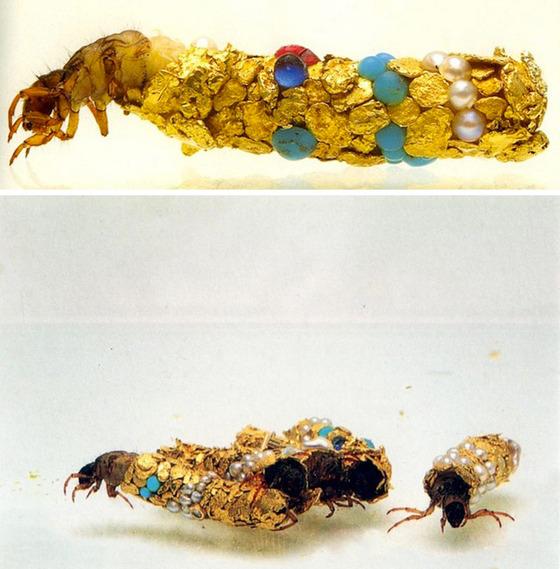 金色に輝くトビケラの幼虫11