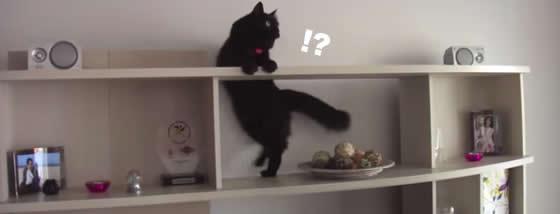 狙った獲物は逃さない猫