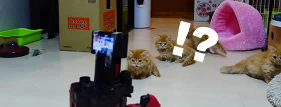 マンチカンの仔猫達に迫る六足歩行ロボット