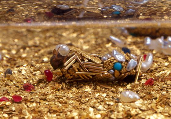金色に輝くトビケラの幼虫1
