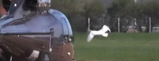 ヘリコプターに恋する白鳥
