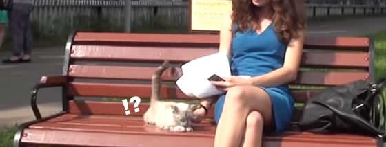 美女の膝に乗りたくてしょうがない猫ちゃん
